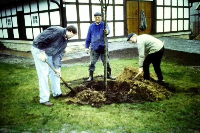 1998 03 Linde pflanzen