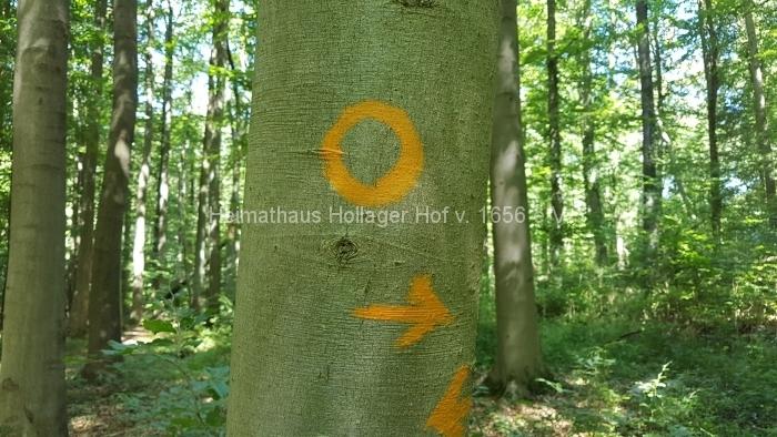 Osn.Ringweg 2018-07-08  (104)