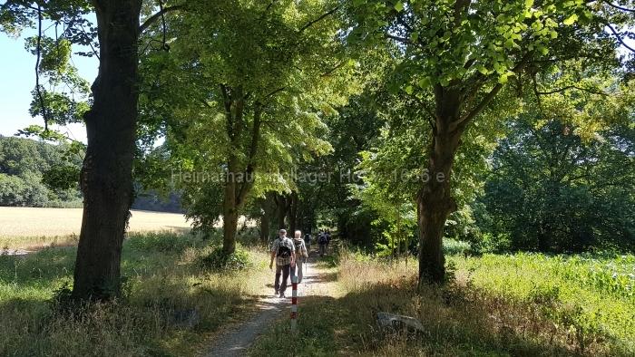 Osn.Ringweg 2018-07-08  (88)