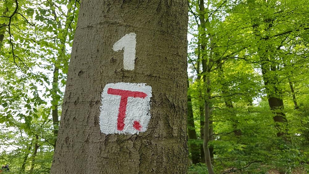 Wanderweg Nr. 1 wird zum Terra.Track
