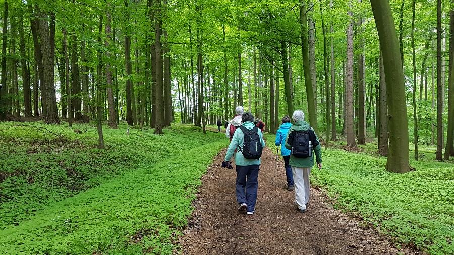 Wandergruppe vom Hollager Hof unterwegs in den Stemweder Bergen.