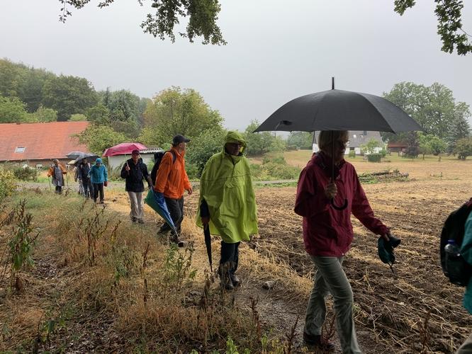 Regenwanderung im Krebsburger Wald