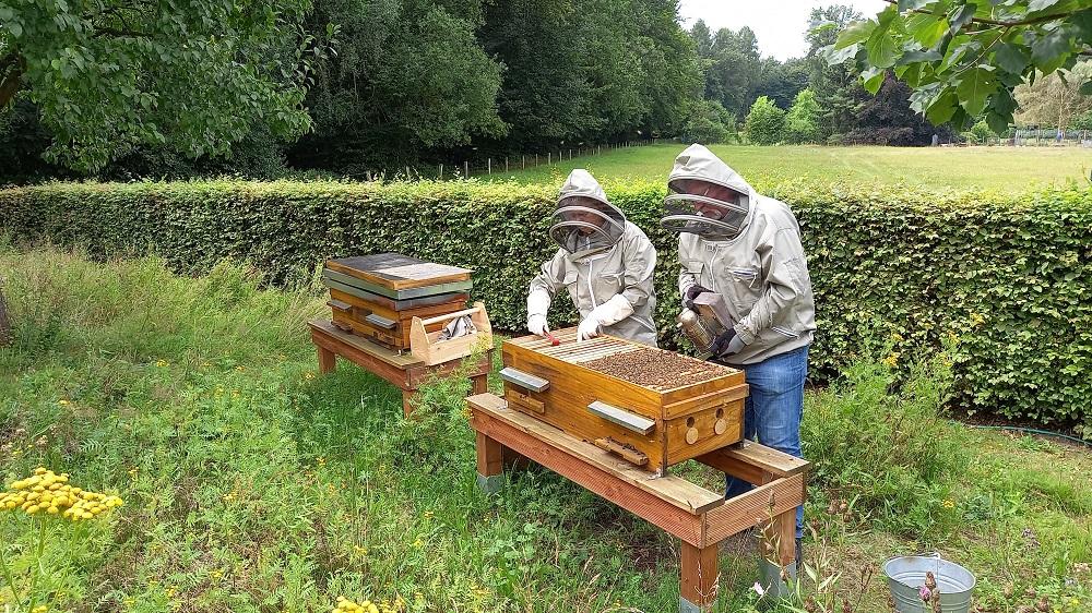 Ein schlechtes Bienen-Jahr 2021